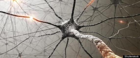 Brain Cells Life Span