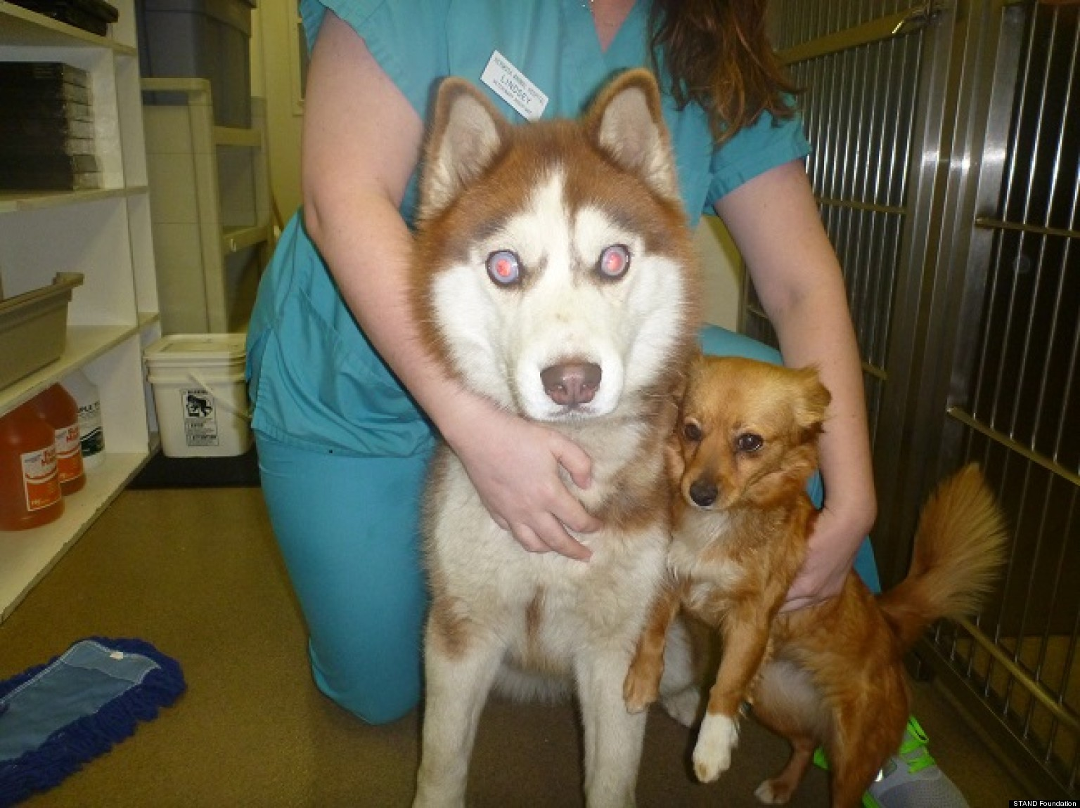 Blind Dog With A Seeing Eye Dog Blind Husky Isaac Needs