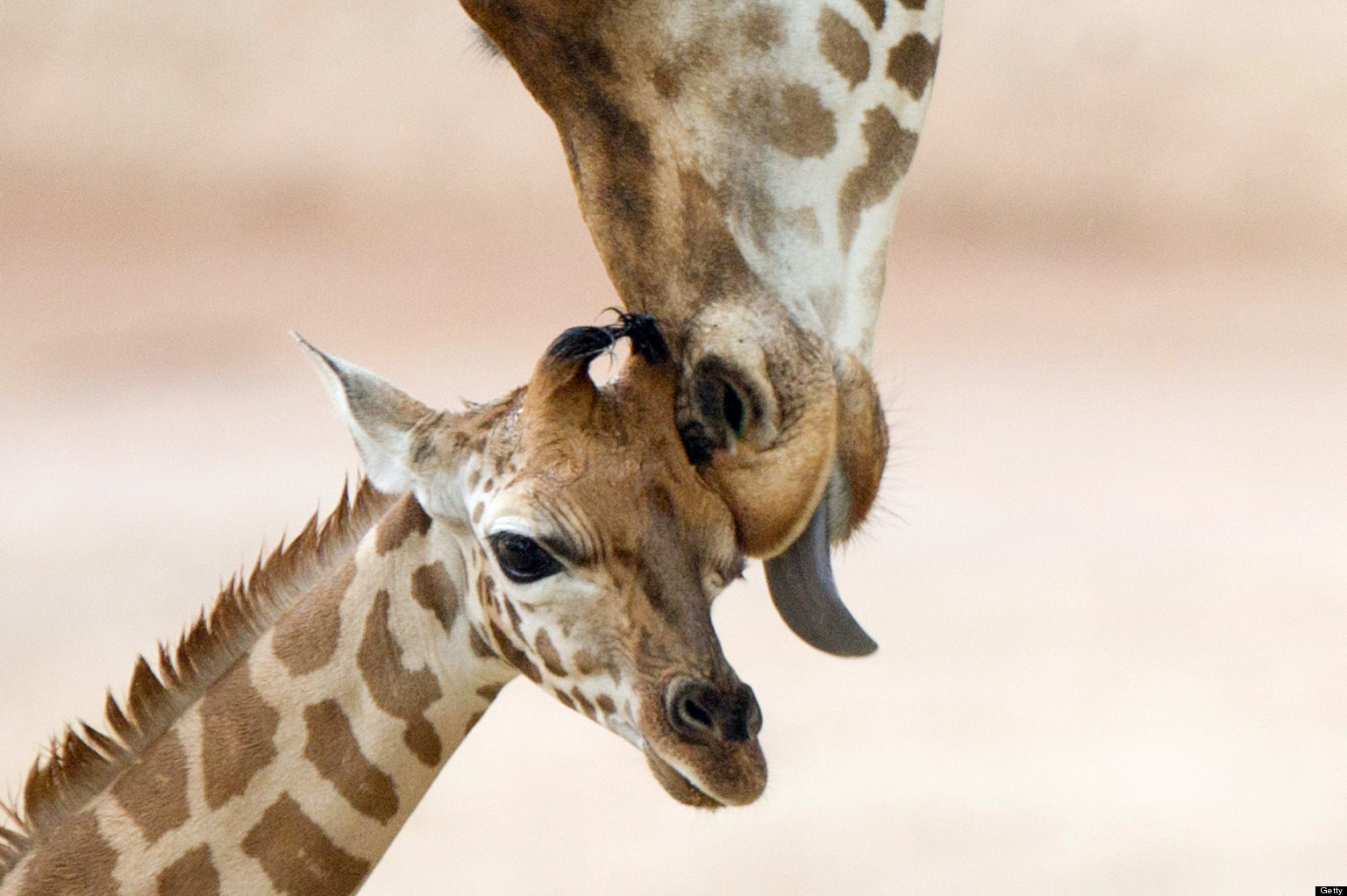 Baby Animals And Mothers 50 Super Cute Babies And Their Moms Photos