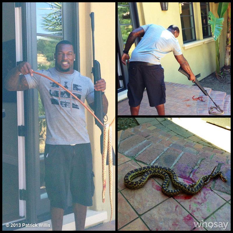 patrick willis snake