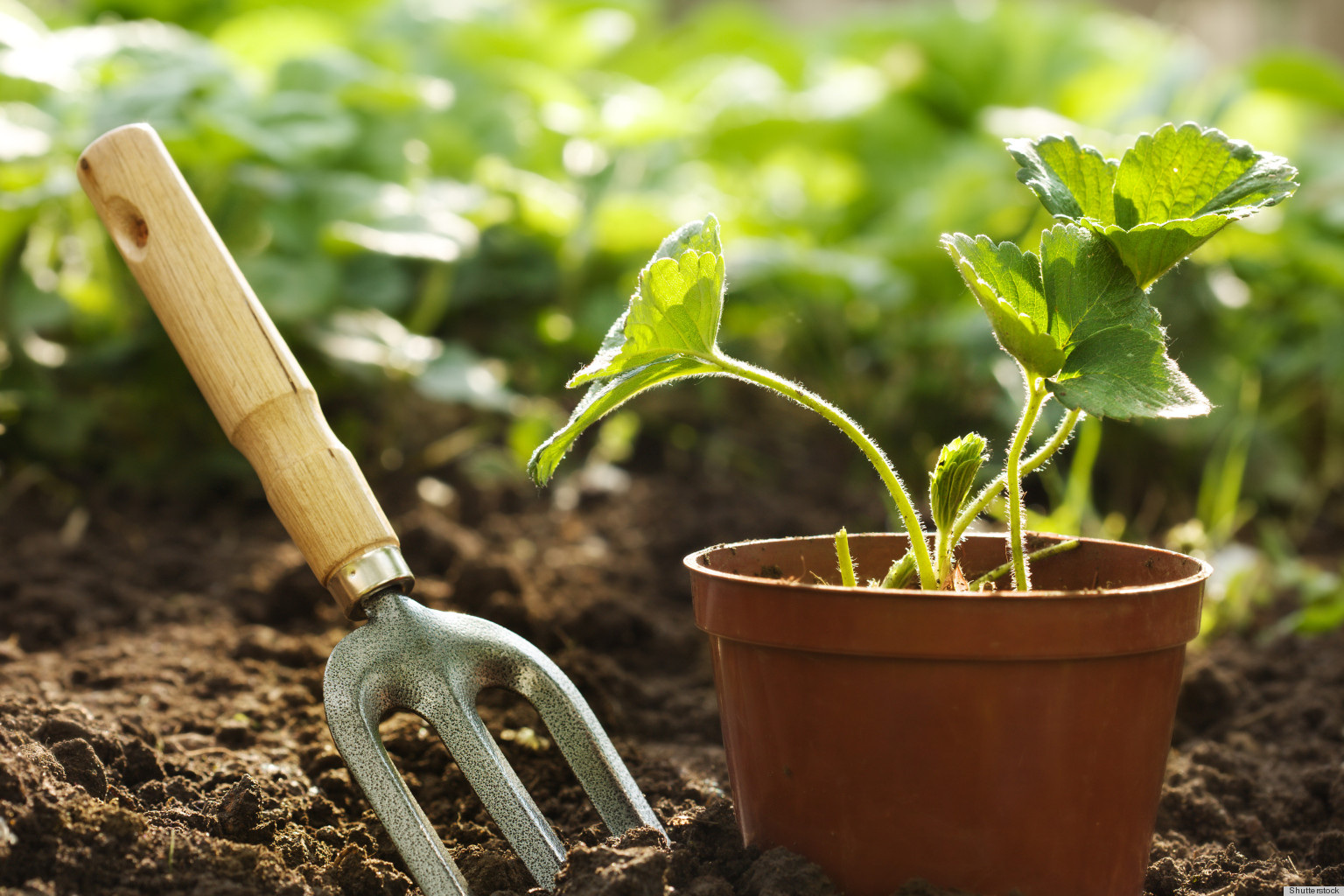 The Sun Is Here at Last - Get Into the Sun and Exercise ... on Gardening  id=28284