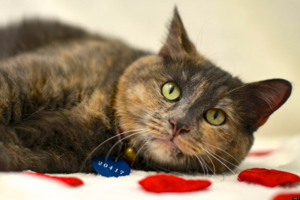 Cats And Kittens Need Homes As Arlington Shelter Reaches ...