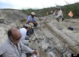 Dinosaur Tail Mexico