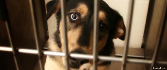 approvata legge contro vivisezione animali