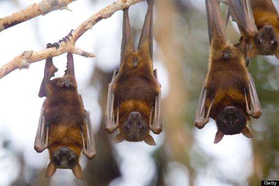 bats upside down