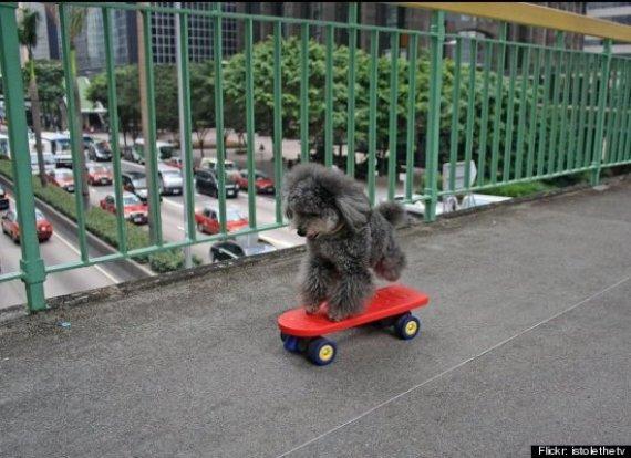 dog skateboard