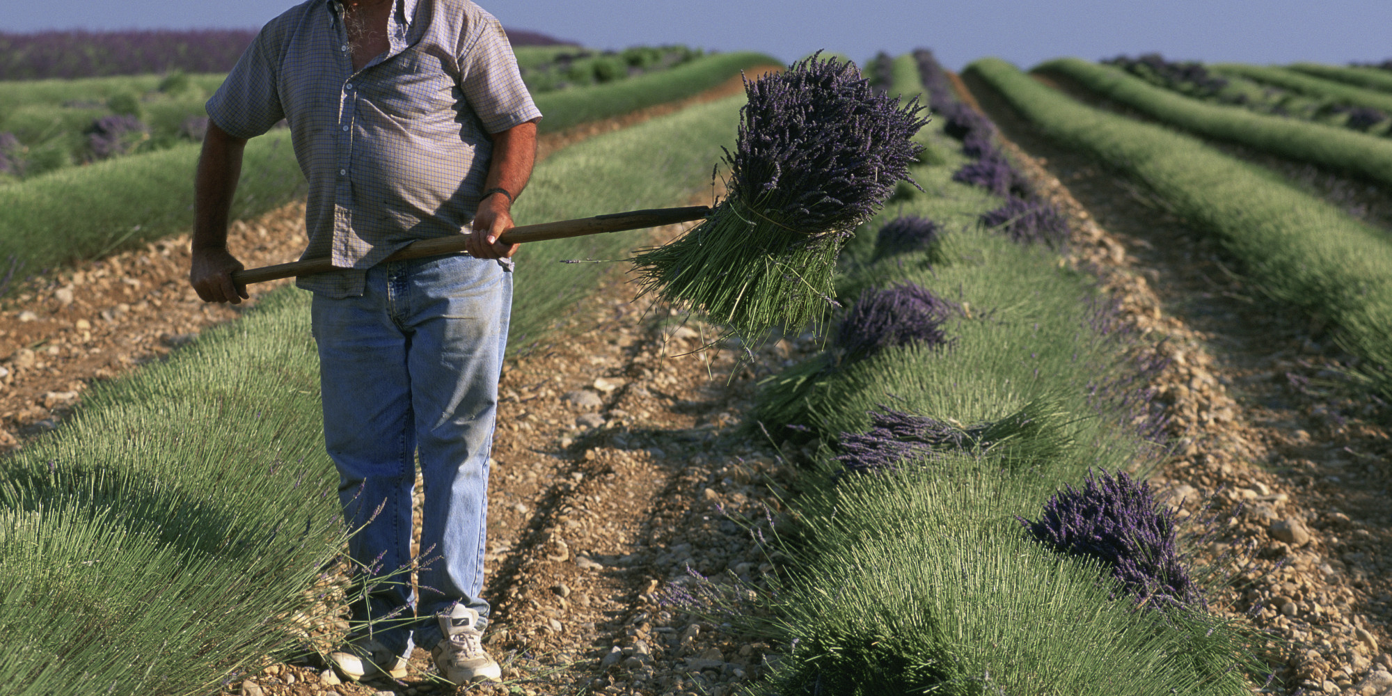 A French Farmer Commits Suicide Every 2 Days Study Says