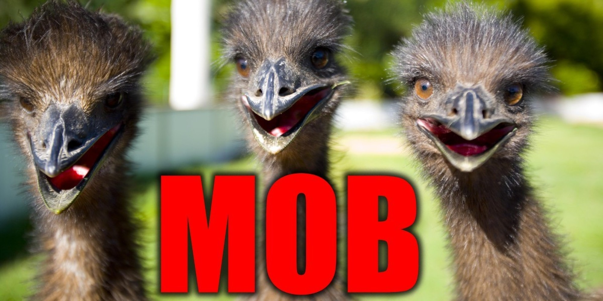 These Are The 19 Weirdest Names For Groups Of Animals