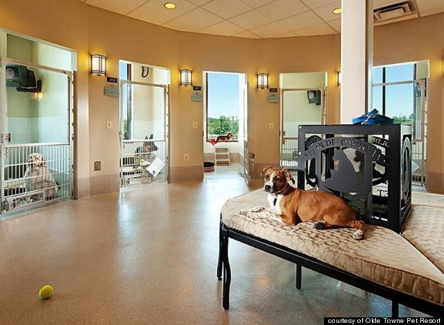 The Amazingly Fancy Pet Resort Where 'Cuddle Dates' Are
