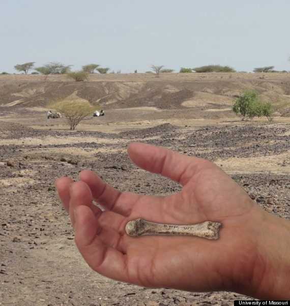 hand fossil