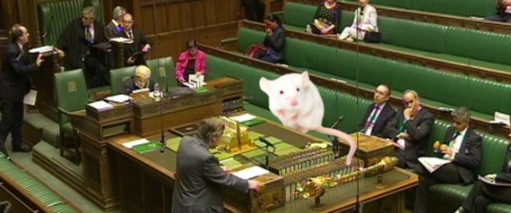 house of commons mice
