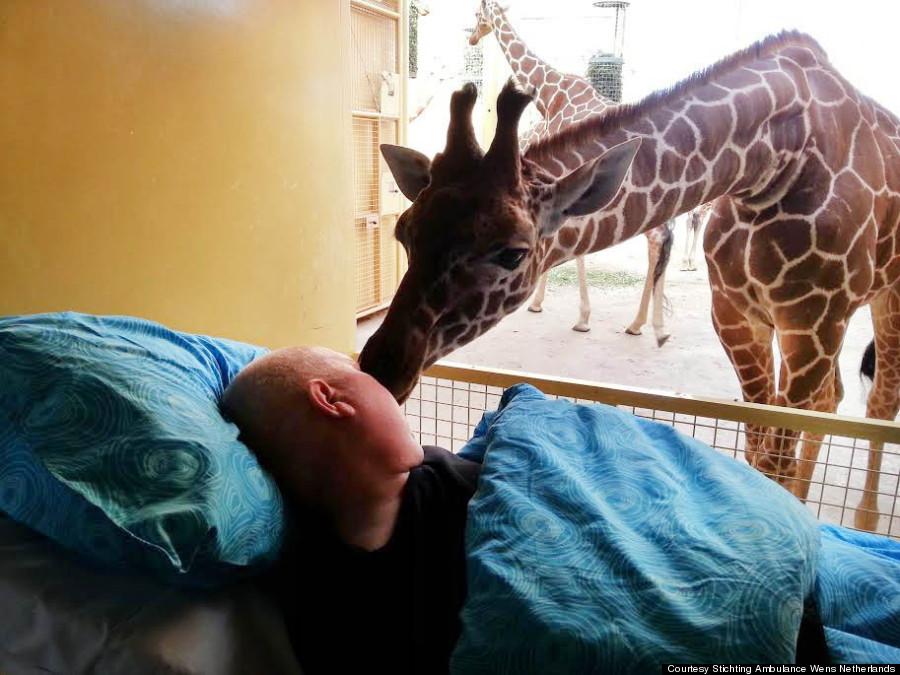 giraffe kiss zookeeper