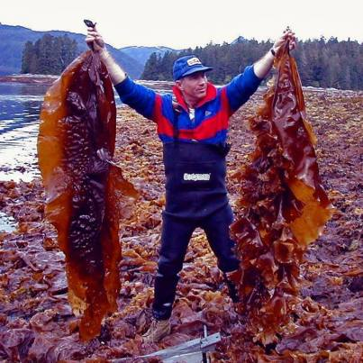seaweead