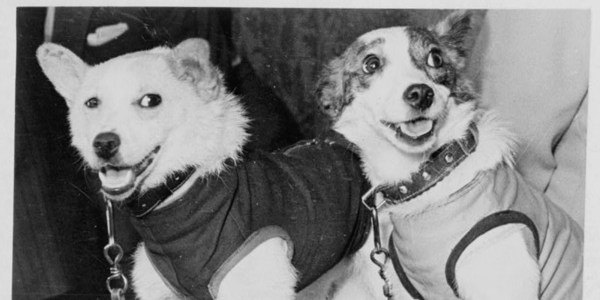 Soviet Dog Spacesuit Up For Auction | HuffPost