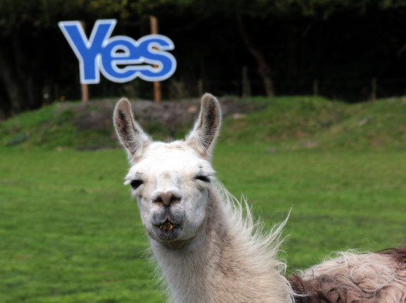 'Yes' And 'No' Campaigns Neck And Neck Ahead Of Scottish ...