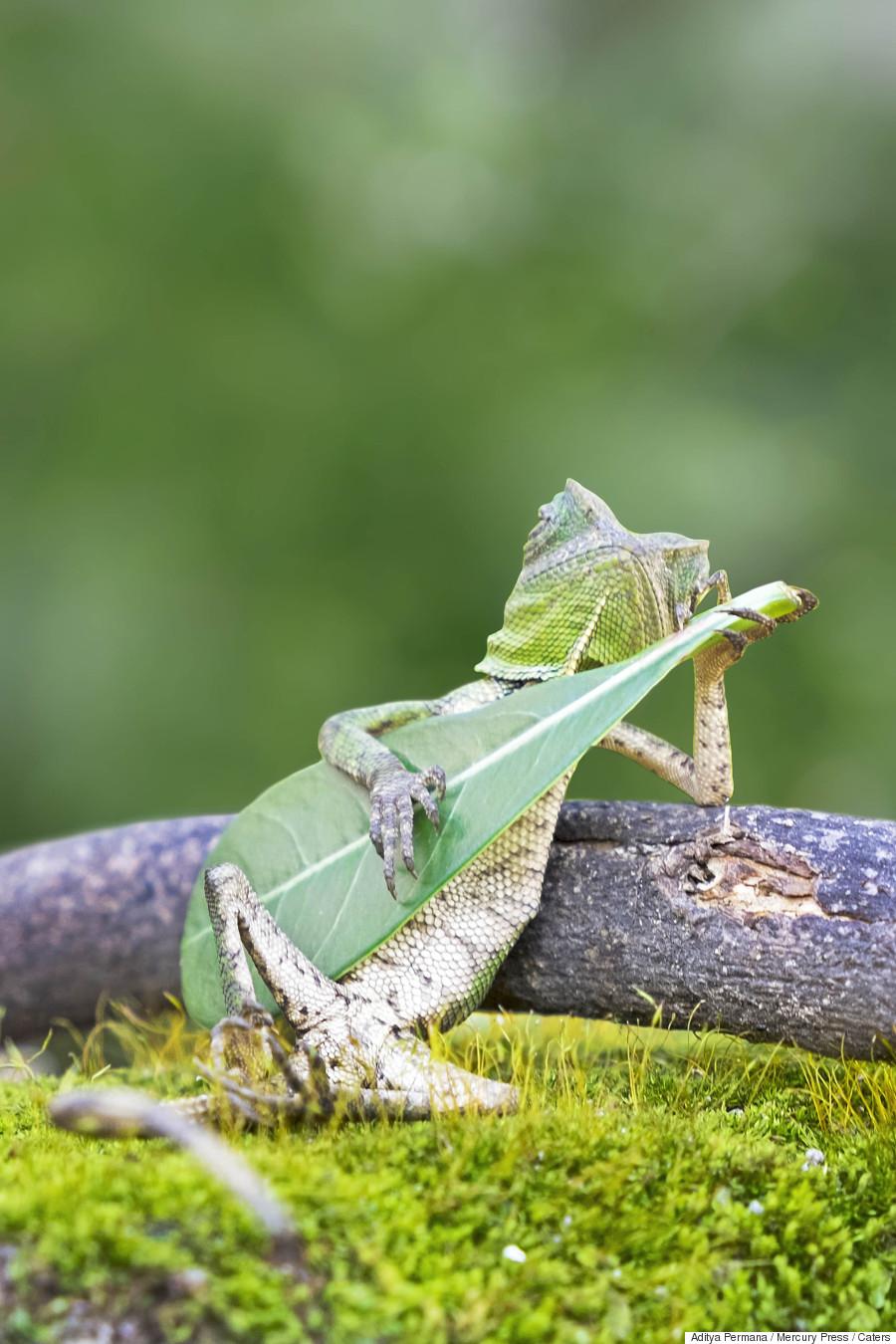lizard guitar