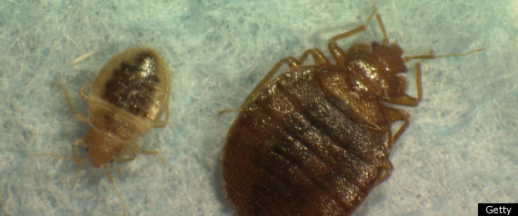 Bedbugs Superbugs