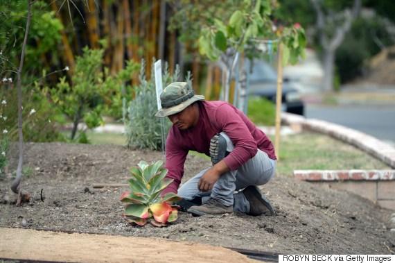 california lawn removal