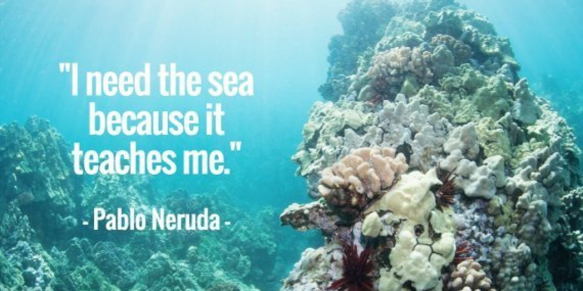 11 Quotes About The Ocean That Remind Us To Protect It