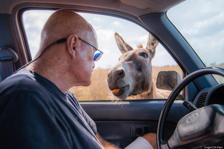 bonaire donkey sanctuary