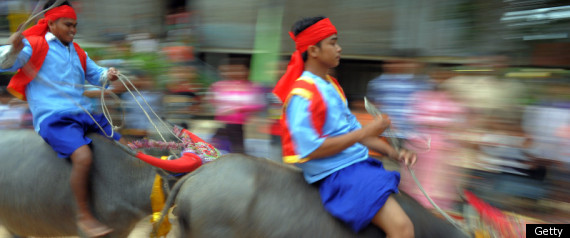 Cambodia's Festival Of Death: Wrestling, Buffalo Racing, Horse Riding