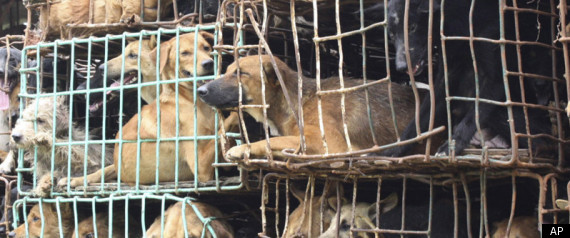 Vietnam Dognapping: Mobs Chase Down Dognappers, Club Them To Death