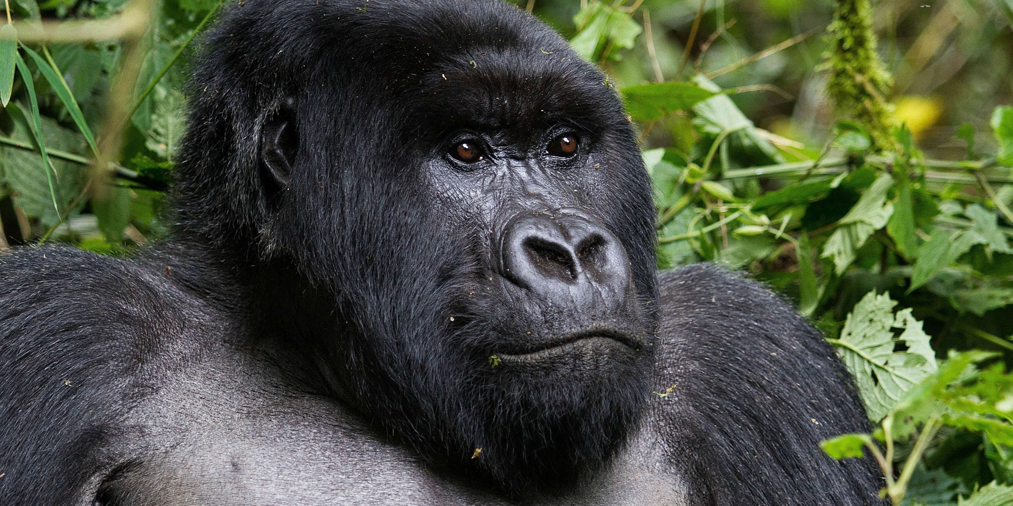 These 8 Animals May Not Survive