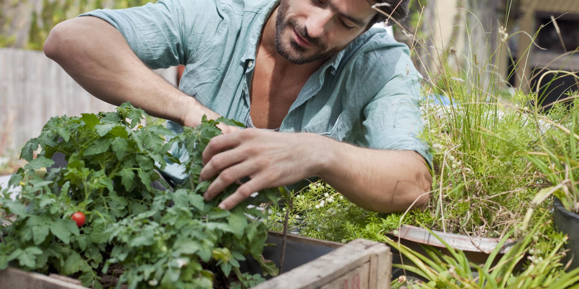 10 Gardening Tips For Beginners on Gardening  id=15938
