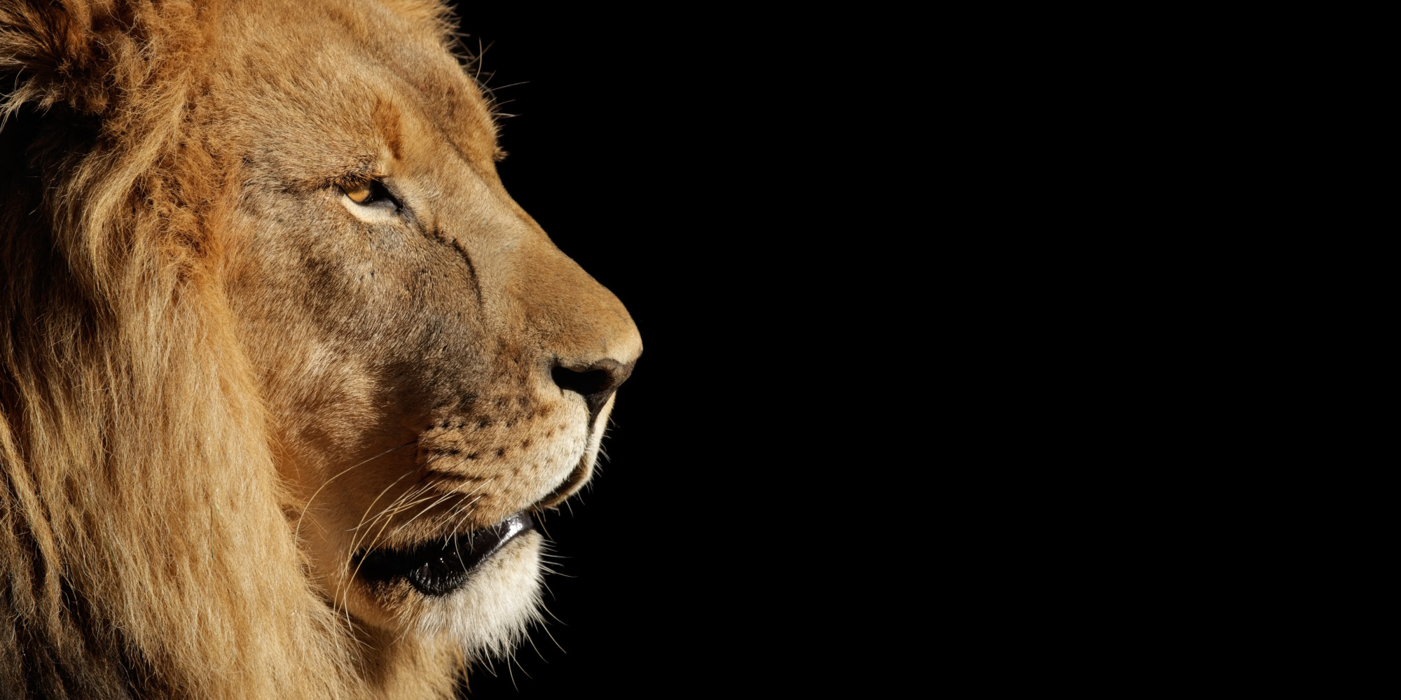 Apres 20 Ans D Absence Les Lions De L Atlas Peuvent Enfin