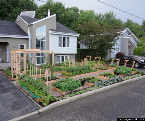 illegal kitchen garden