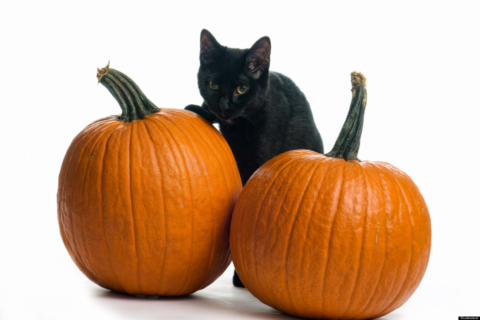 Image result for pictures of halloween black cats