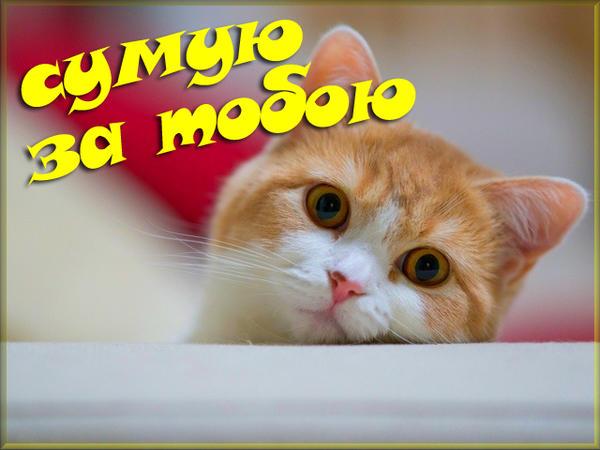 Поздравительная открытка Сумую за тобою