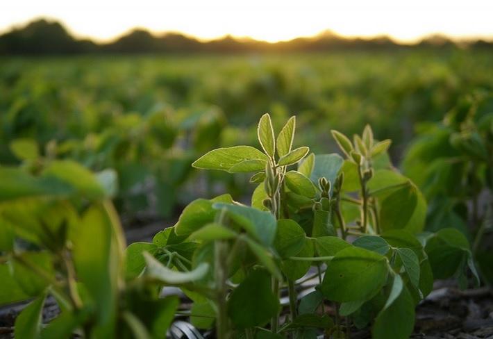 Biotecnología vs. Ecología. Su aplicación en la Agricultura. Modelos agrarios