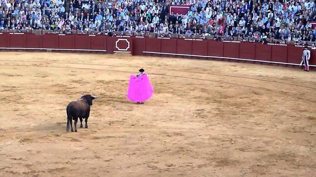 Las fiestas crueles con animales objeto de estudio en la I Conferencia Europea de Derecho Animal