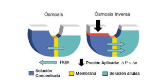 fenomeno-osmosis