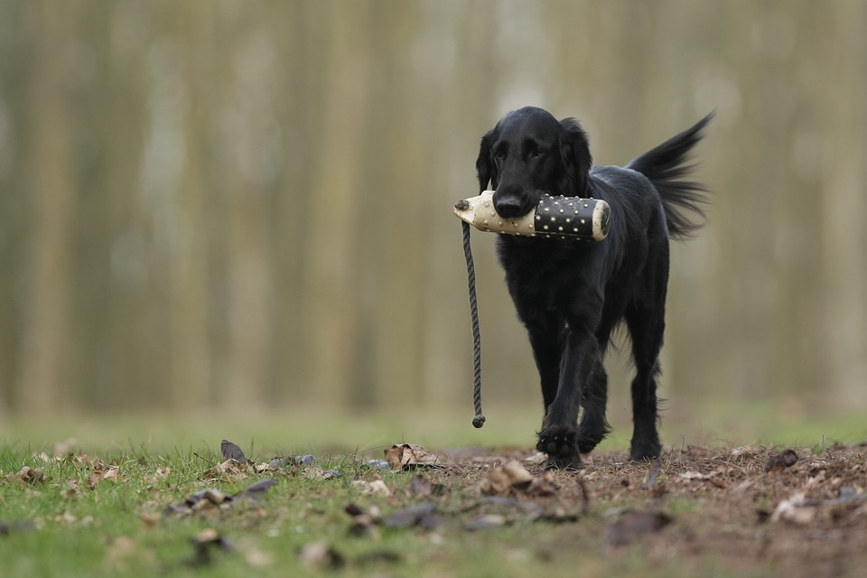 Take It, dog training, dog tricks, teach your dog tricks, train dogs