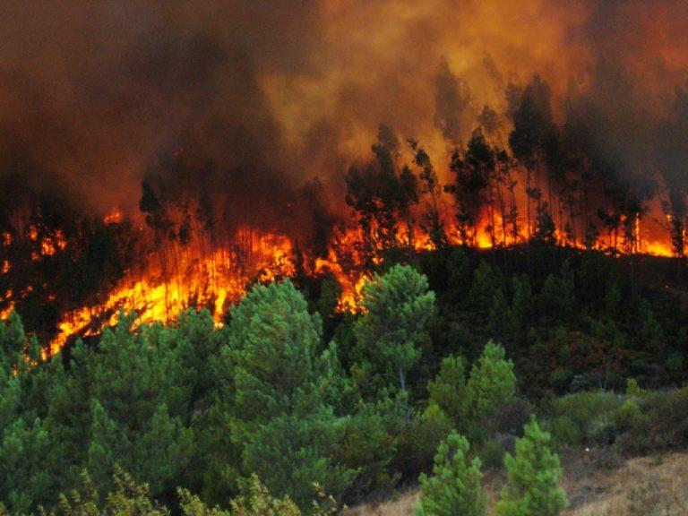 Sabag Pide medidas de prevención por posibles incendios forestales en Ñuble.