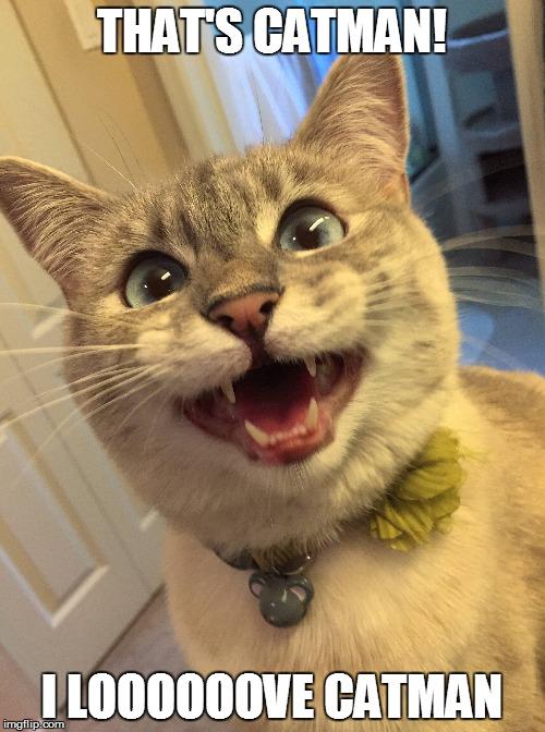 1lmey1?resize=500%2C672&ssl=1 bane cat meme maker the best cat 2018