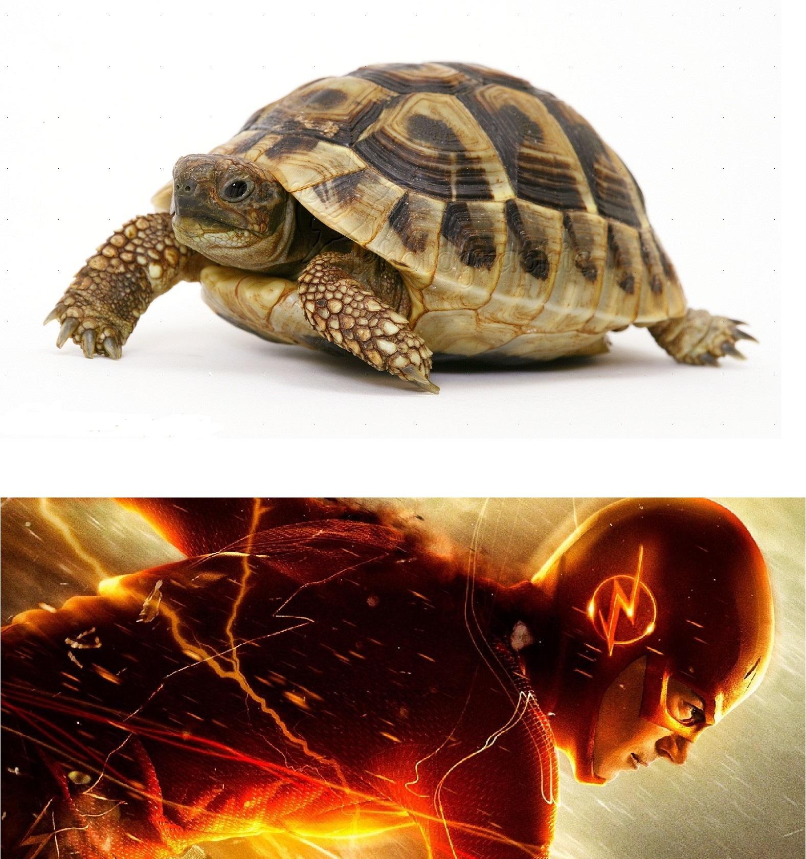 Slow Meme Templates
