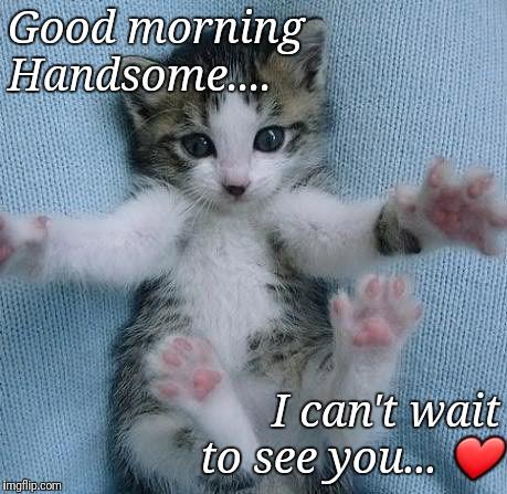 Goodmorning kitten - Imgflip