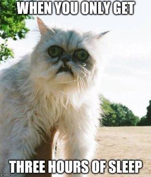 Image result for cat meme sleep