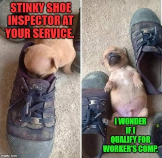 Puppy smelling some very sticky shoes and passing out. They like chewing shoes with your smell.