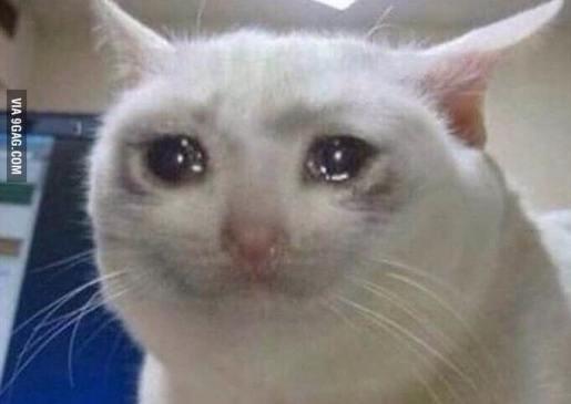 Image result for sad cat