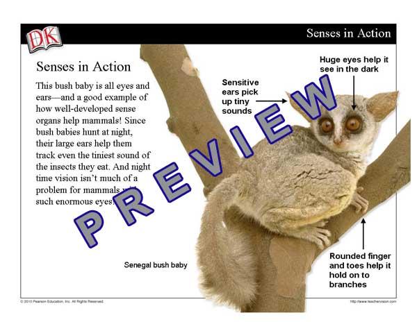 Characteristics Of Mammals Mini Lesson