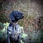 Best Dog Photos Per The Kennel Club Insider