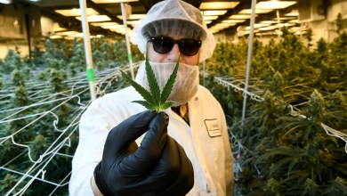 New York Legal Marijuana Strategy: Cultivator or Vertically Integrated