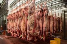 Połowa podejrzanego mięsa z Polski nie trafiła do konsumentów