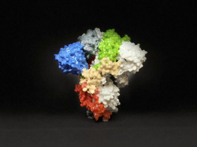 Trójwymiarowy model cząsteczki koronawirusa / NIAID /Agencja FORUM