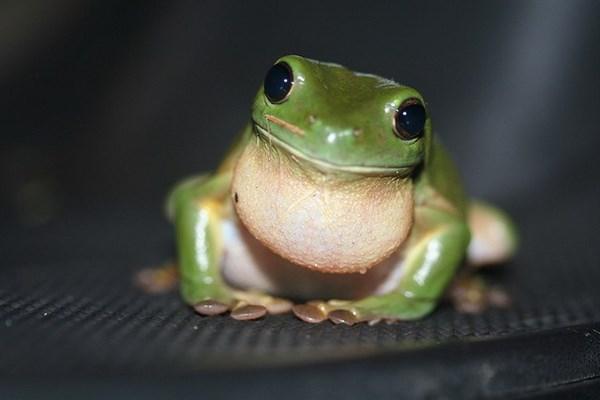 8 loài động vật không ăn mà vẫn sống khỏe