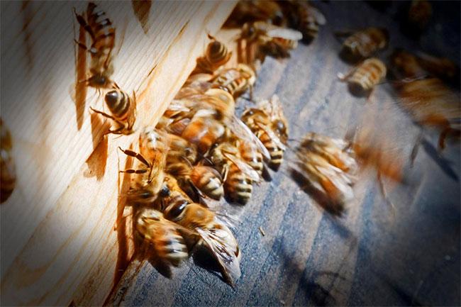 Vào mùa xuân năm 2013, có một đàn ong đã làm tổ trên mái nhà kho đồ thánh.